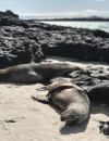 Land of plenty | A cruise-free guide to the Galápagos