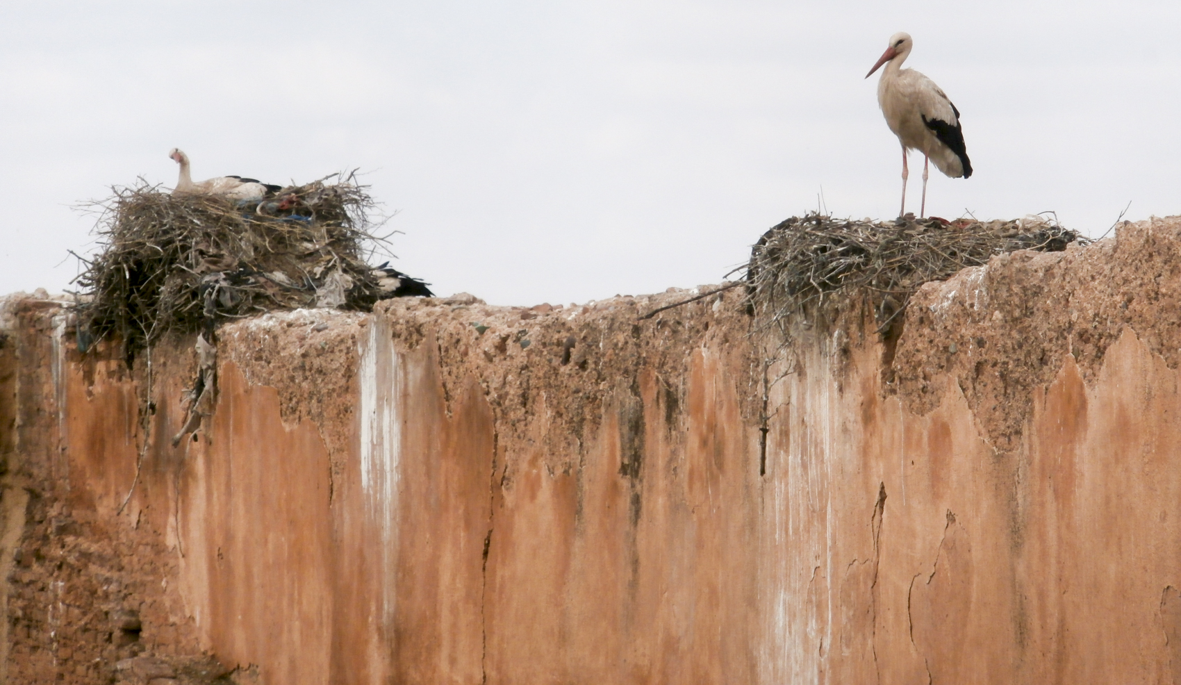 "Storks roosting at El Badii Palace where the MMPVA is currently ""camping"""